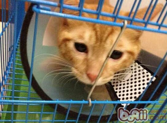 不容小视的猫咪的嫉妒心
