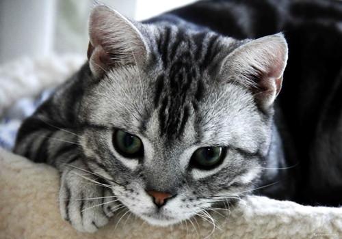 母猫多大可以生小猫