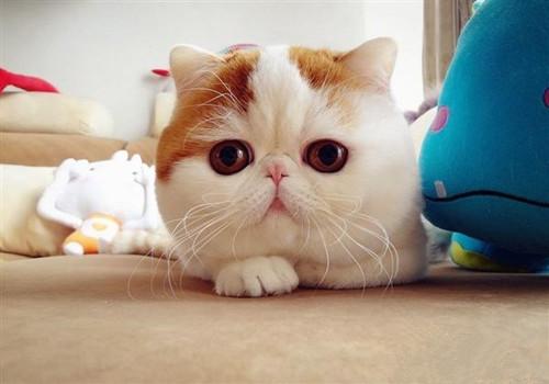 猫咪肠胃炎吃什么药