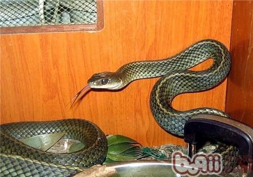 乌梢蛇的生活环境