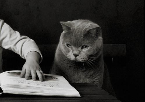 如何训练幼猫不乱抓挠|幼猫饲养-波奇网百科大全