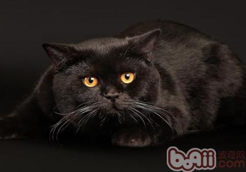 如何帮助猫咪化毛