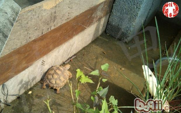 夏季陆龟易患空调病