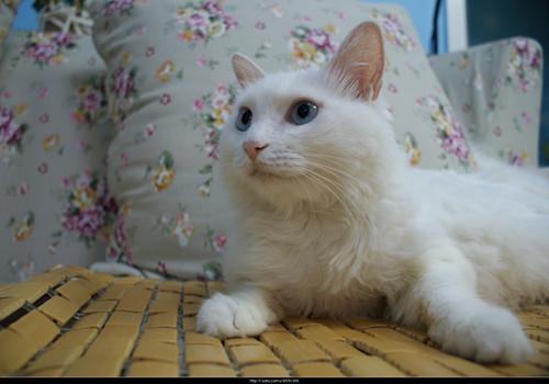 猫咪什么时候繁殖小猫最合适