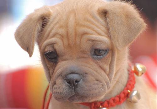 狗狗得皮肤病后不能吃哪些食物