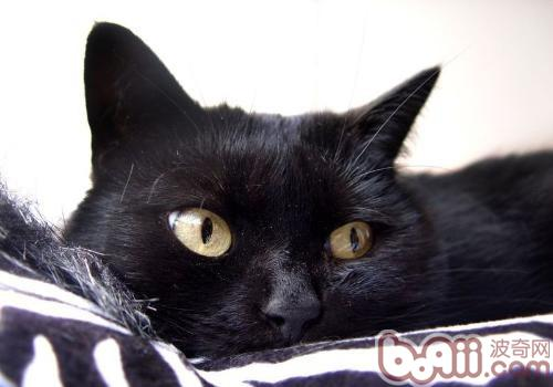 刚出生的小猫要注意什么