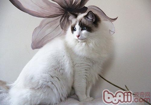 猫 油画步骤