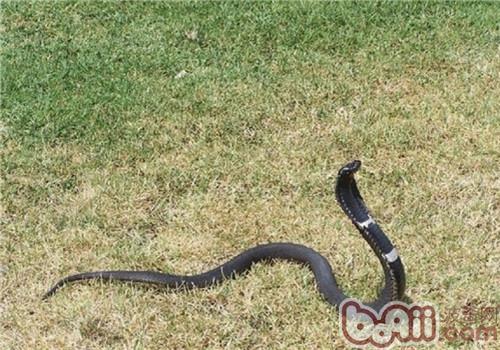 舟山眼镜蛇的生活环境
