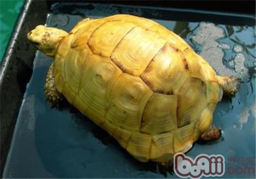 欧洲陆龟的生活环境