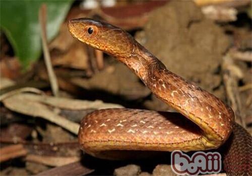 紫砂蛇的形态特征