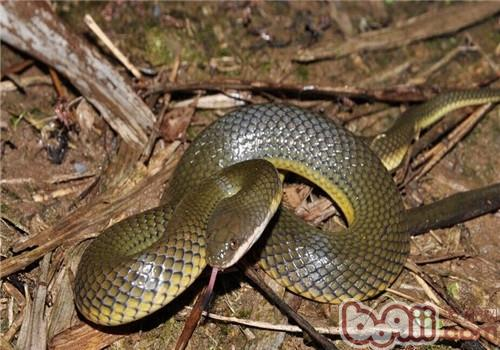 中国水蛇的生活环境