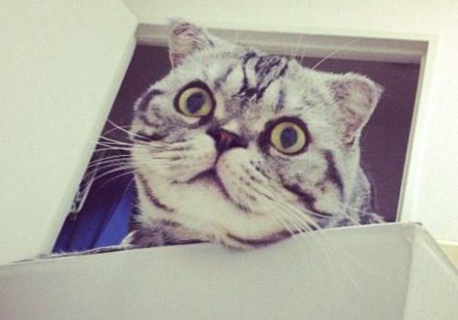 貓咪胡須的作用