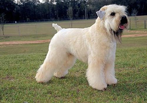 人工哺乳狗狗的方法