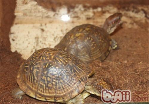三趾箱龟的生活环境