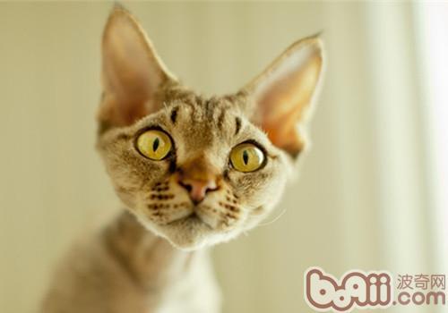 猫咪体温过低可能是危险信号