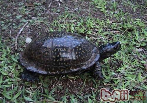 乌龟海岸 xl1