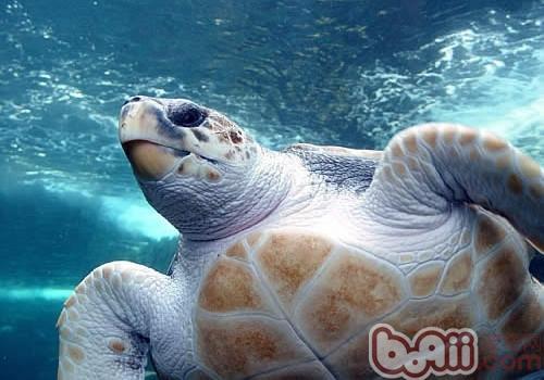 太平洋蠵龟的生活环境
