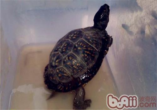 海岸箱龟的生活环境