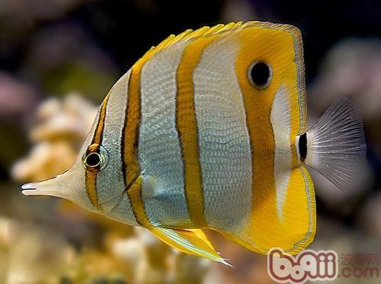 鱼类的环保小制作
