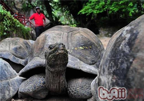 亚达伯拉象龟的生活环境