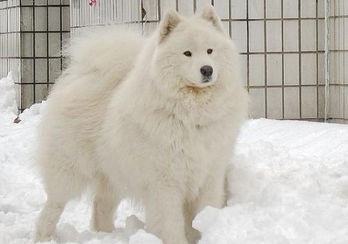那么狗狗又是怎么过冬的呢?冬天狗狗怕不怕冷呢?