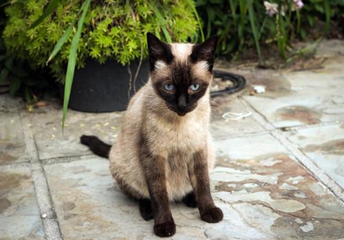猫咪什么时候可以达到性成熟