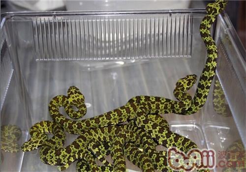 莽山烙铁头蛇的栖息环境