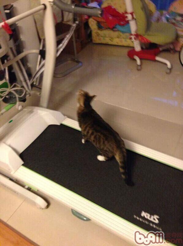 猫奴必须关注的几件事之必威体育appios肥胖