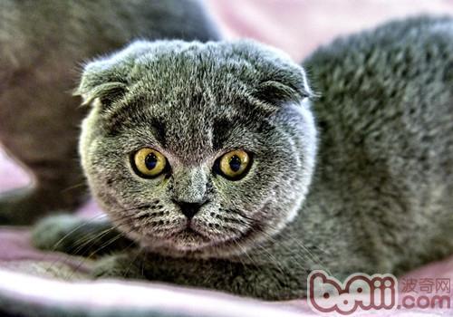 猫咪感冒防治方法