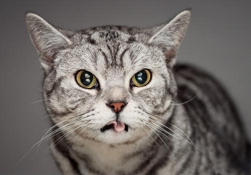 猫咪发情的各种表现