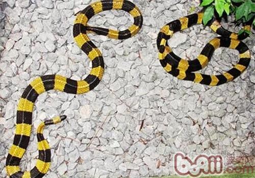 金环蛇的生活环境