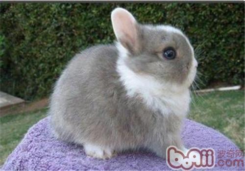 况下宠物兔不用洗澡图片