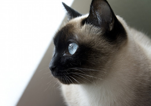 猫咪预产准备