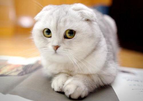 猫咪可爱清晰图片大全