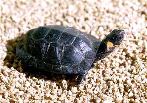 木雕水龟的护理知识