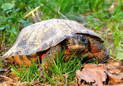 木雕水龟的生活环境