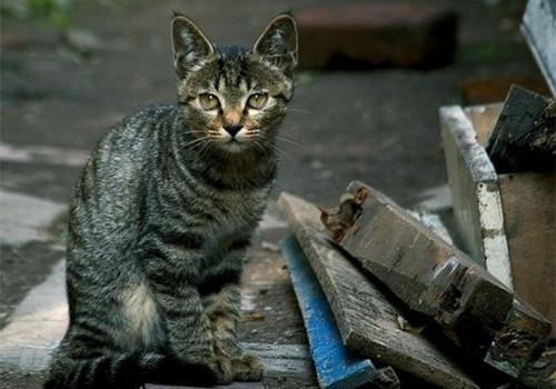 如何通過牙齒估算貓咪年齡