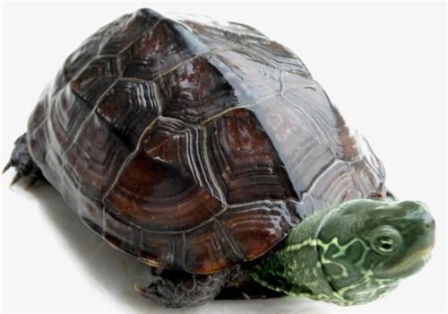 种龟龟池的建造方法