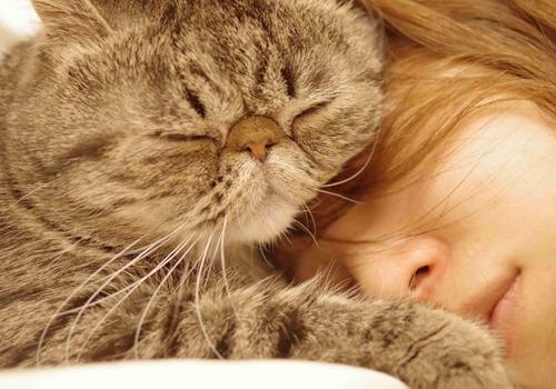 猫咪繁殖有四点注意