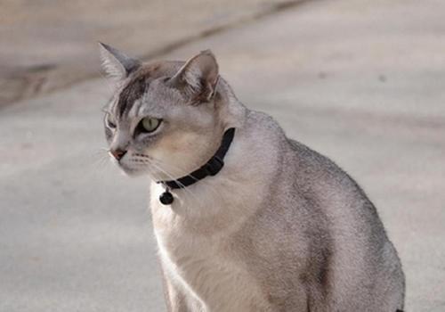 养猫常备药品有哪些
