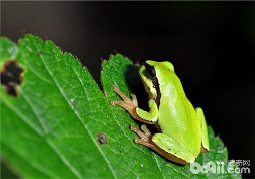 华西雨蛙的生活环境