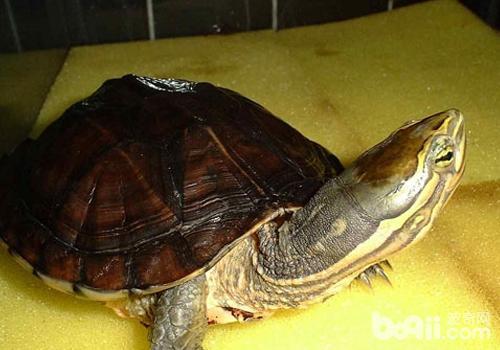 养龟水质是关键