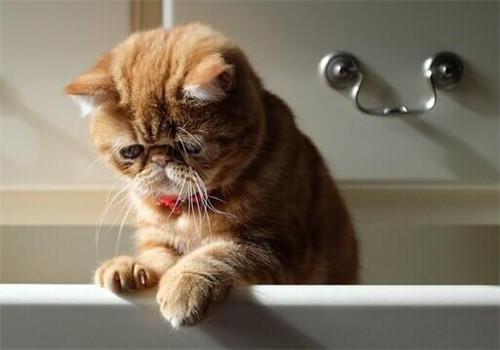 貓咪多久才能長齊乳牙