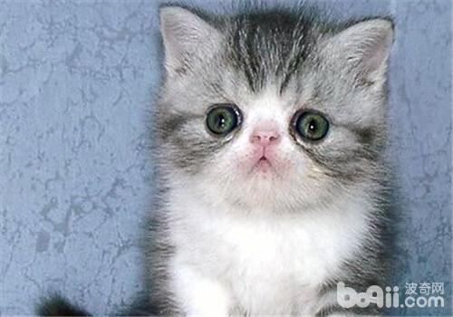 市面上常见的猫砂有哪些