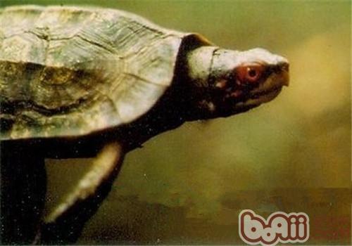 蔗林龟的生活环境