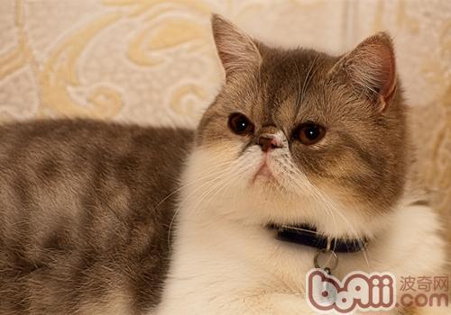 猫咪用松木猫砂好吗
