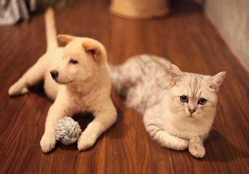 猫咪常见的骨骼疾病有哪些