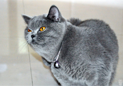 如何预防小猫猫瘟传染