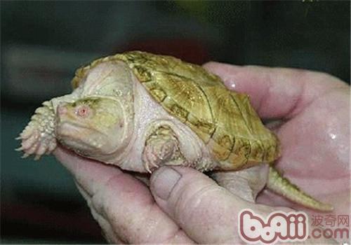 乌龟编织图解和步骤