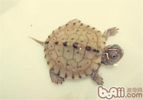 乌龟饲料要消毒吗?